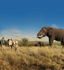 Elephant Walk SINGLE