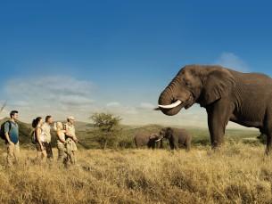 Elephant Walk SINGLErecadrée