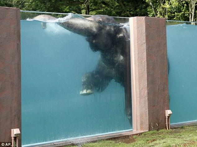 """alt=""""elephant piscine"""""""