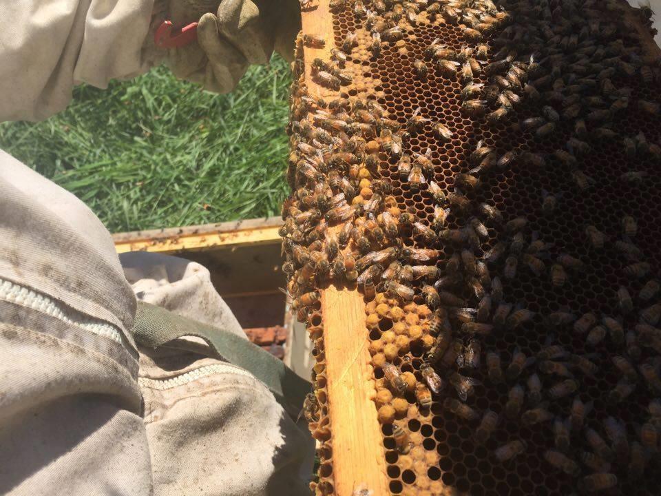 Photo: Facebook Miel des Ruisseaux Économusée de l'apiculteur