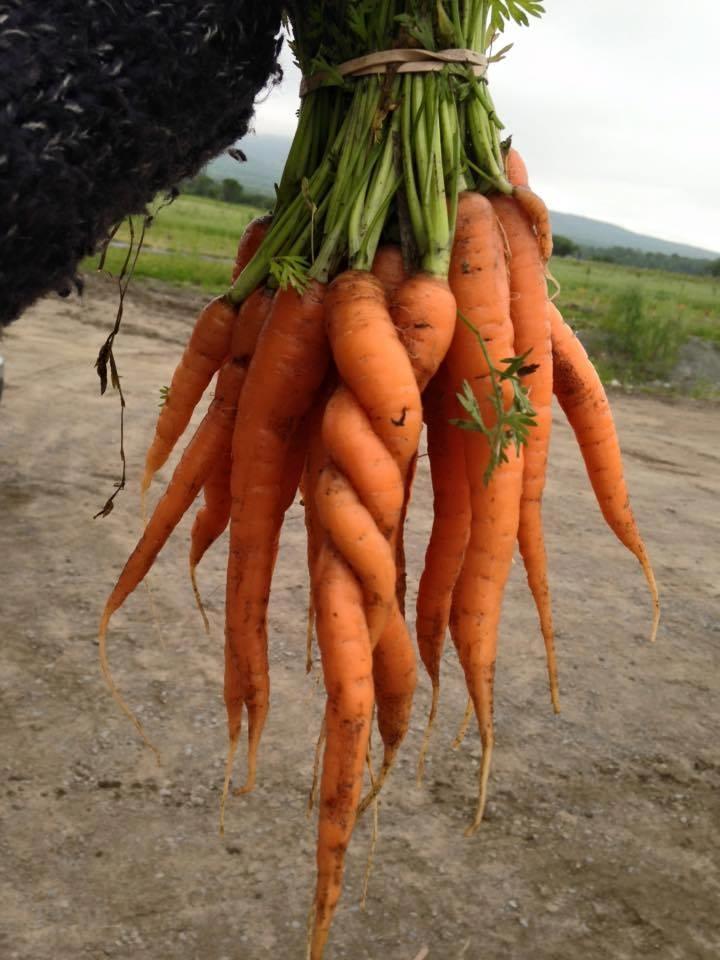 Photo: Facebook Cité Agricole
