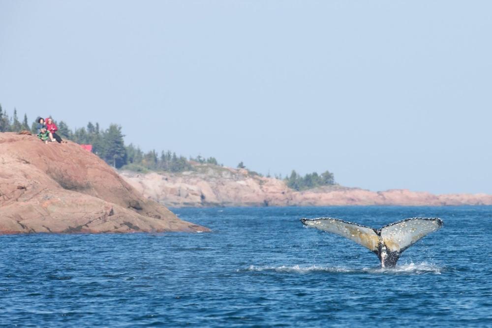 Sur la route des Baleines. Photo: Facebook Tourisme Québec.