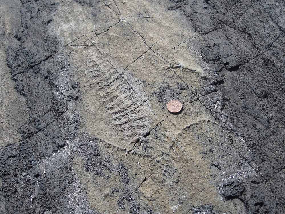 Photo: Fossile, Alicejmichel - commons.wikimedia.org