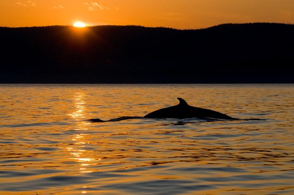 Photo: Facebook Parc marin du Saguenay-Saint-Laurent
