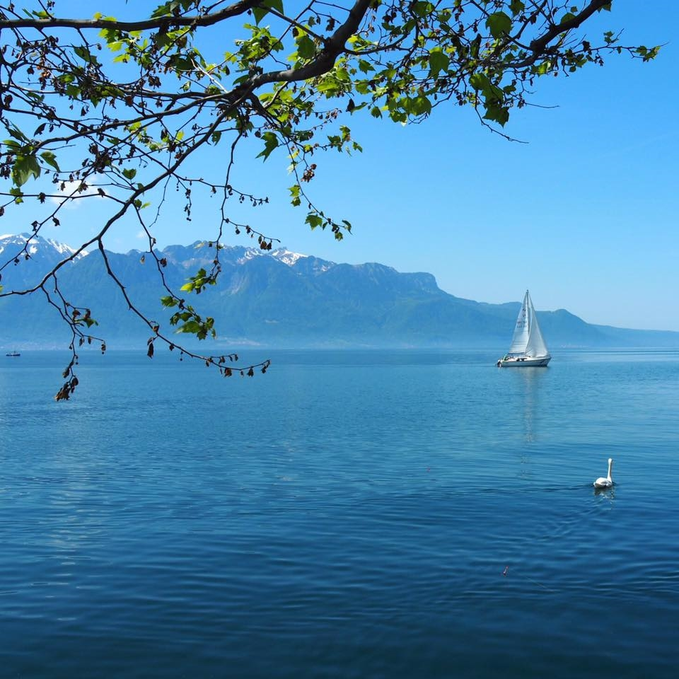 Le lac Léman, vu de Vevey. Photo: Marie-Julie Gagnon.
