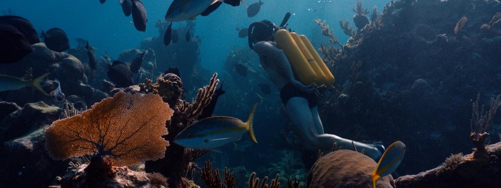 """alt=""""lodyssee-cousteau-film"""""""