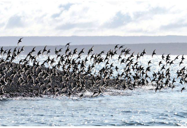 Photo: Facebook Parc marin du Saguenay-Lac-Saint-Jean - Journée des oiseaux migrateurs