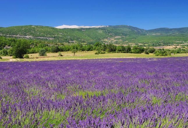 Mont Ventoux. Photo:  Shutterstock