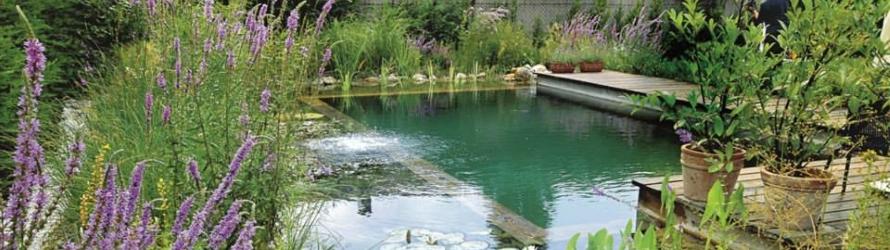 Coup de cœur <br/>pour la piscine naturelle