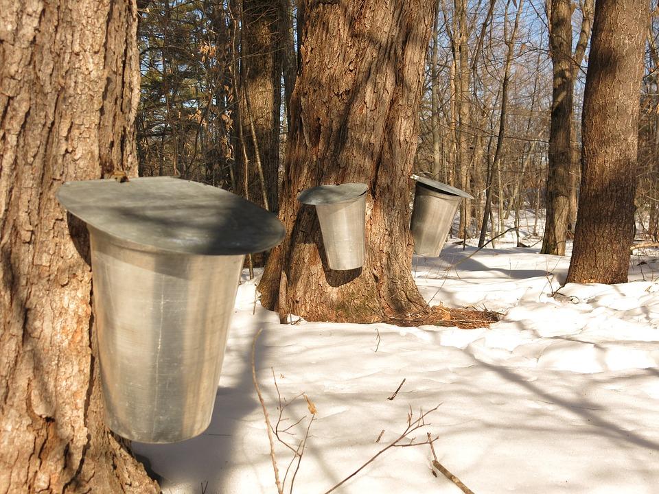 Le savoir-faire traditionnel de la fabrication du sirop d'érable et le sirop lui-même font partie du patrimoine québécois et pourraient prétendre à une reconnaissance de l'UNESCO.<br />Photo Pixabay