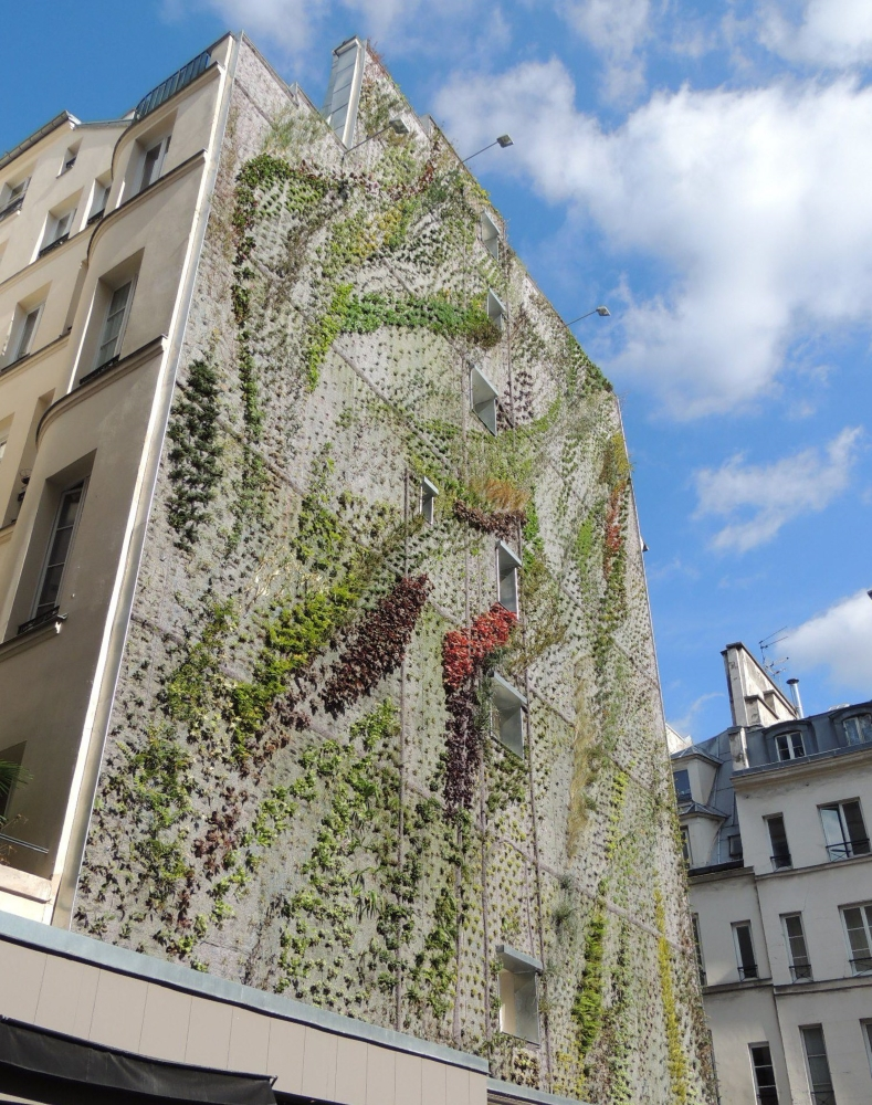 Le mur végétal en pleine croissance. Photo: Facebook L'Oasis d'Aboukir