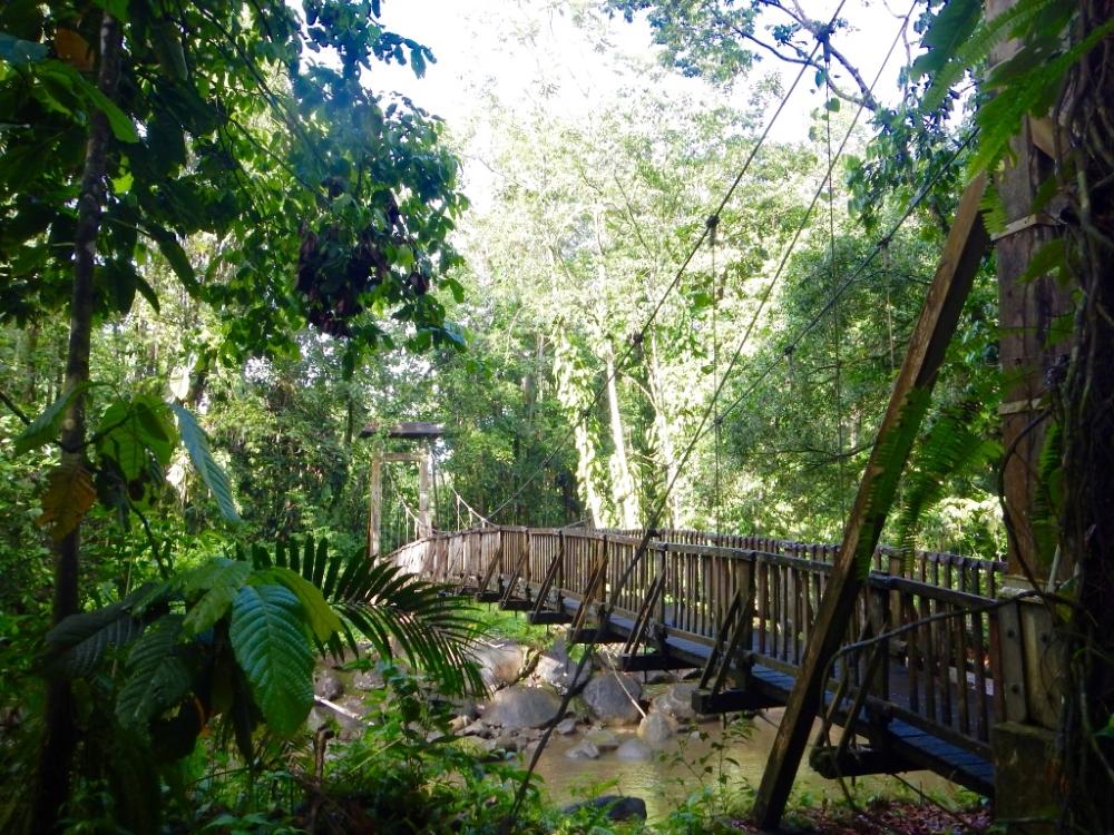 Pont suspendu dans la forêt pluviale, près de la Maison de la forêt, sur l'île de Basse-Terre. Photo: Anne Pélouas