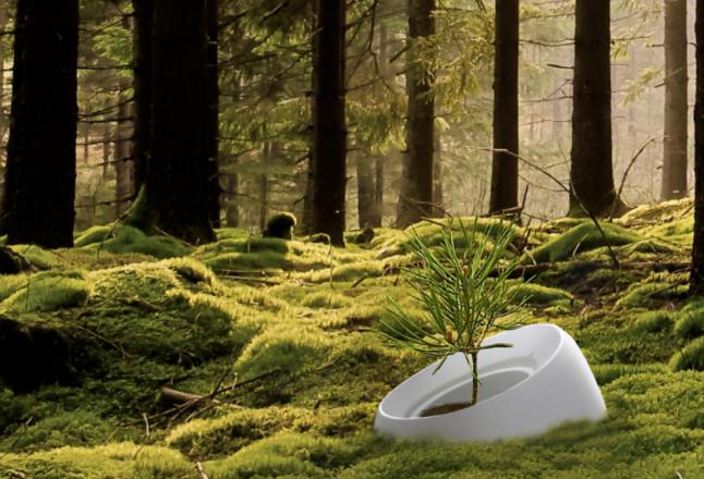 Roots, une urne funéraire pour transformer les cimetières en forêts