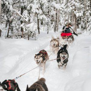 Essayez le traîneau   chiens avant la fin de l'hiver! Photo: Facebook Kinadapt