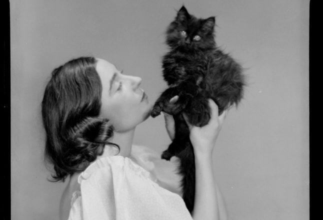22 photos de chats… avant Internet!