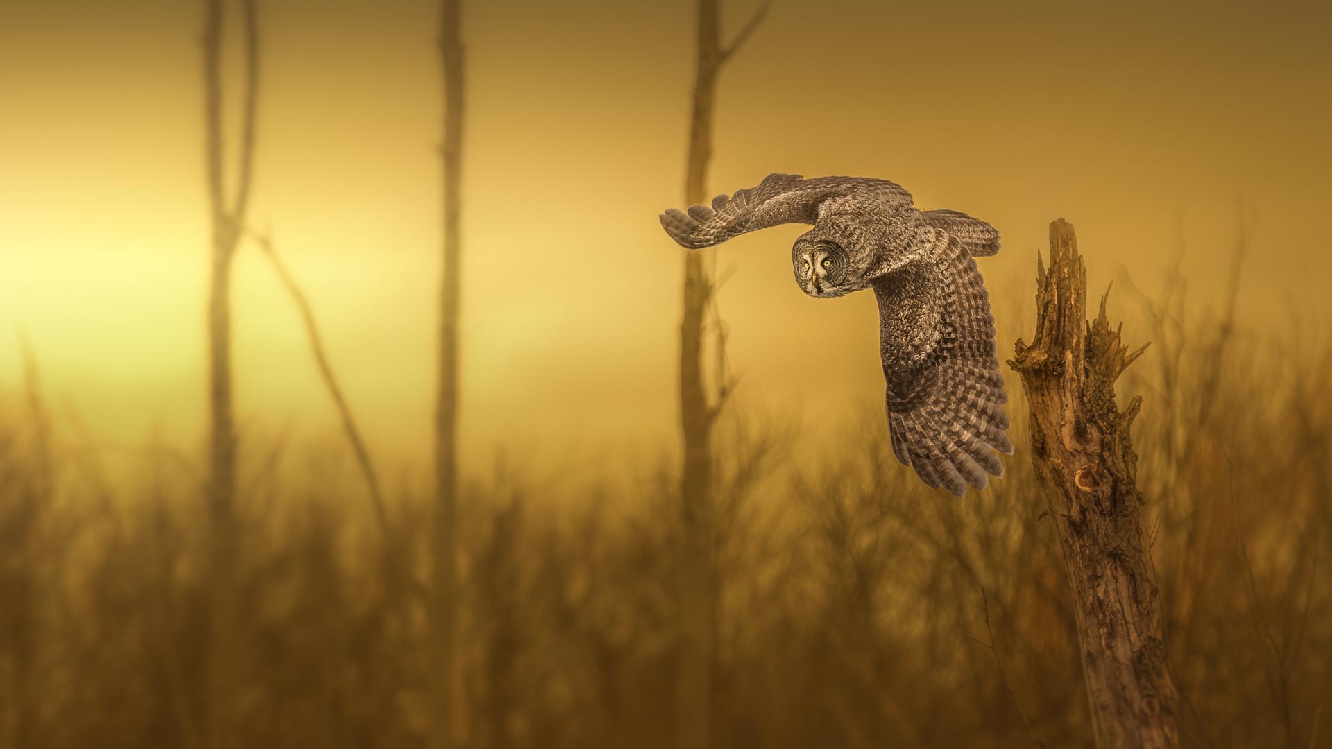"""L'heure de la chasse"" Yves Kéroack Club photo Impression 2e prix thème: Animalier"