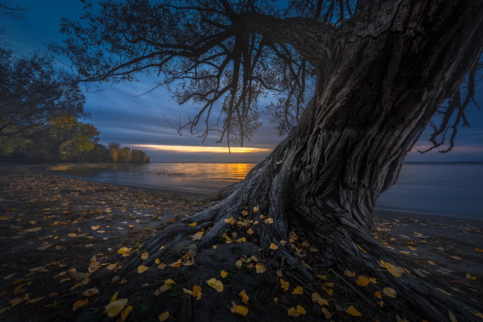 """""""L'arbre est dans ses feuilles"""" Yves Kéroack Club photo Impression 1er prix thème: Nature"""
