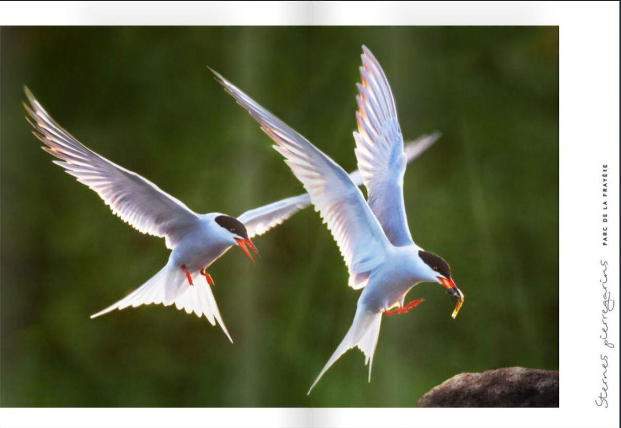 Saisie d'écran d'une des pages du livre photo L'envolée de Julie Vaillancourt, Club de Boucherville 1er prix