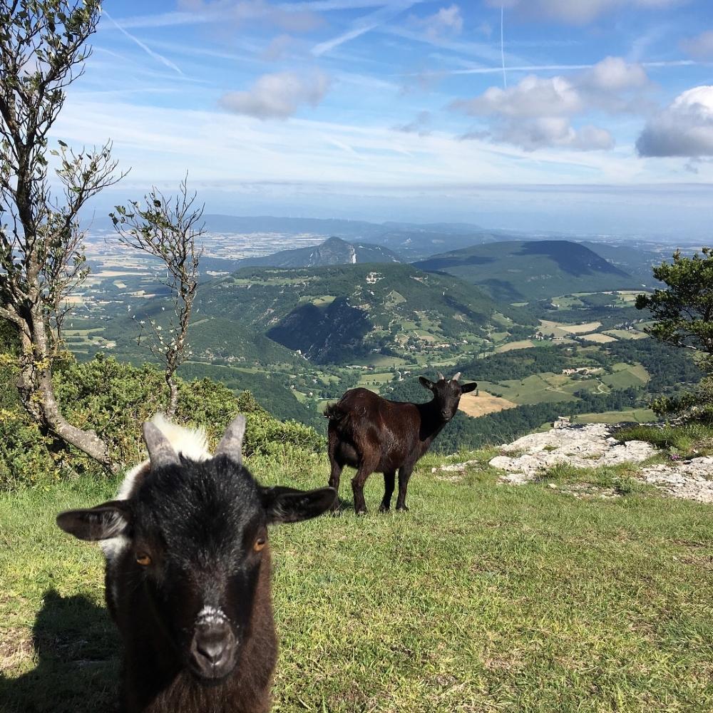 Le sommet de la montagne Saint Maurice offre une vue magnifique sur le massif du Vercors. Photo: Marie-Julie Gagnon