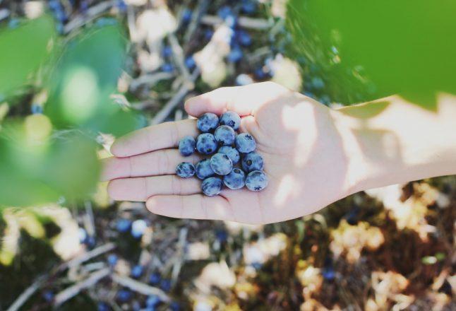 5 activités agrotouristiques à faire cet été