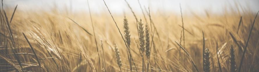 Pesticides au Québec: un nouveau plan est annoncé
